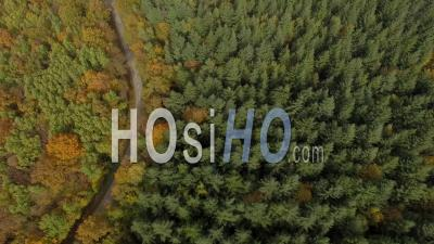Forest In Autumn In Isere, France – Aerial Video Drone Footage