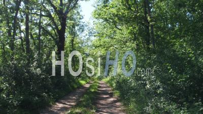 Forest's Path In Correze - Video Drone Footage