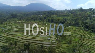 Rice Paddy On Bali Indonesia - Video Drone Footage