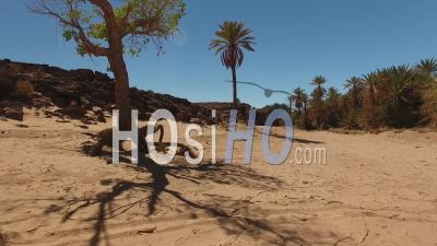 Oasis South Morocco Erfoud