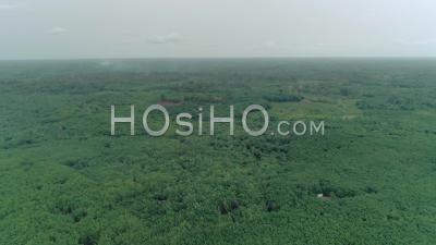 Banco National Park In Abidjan, Video Drone Footage