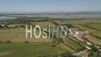 Zone Humide Près Du Petit-Rhône, Camargue, Vidéo Drone