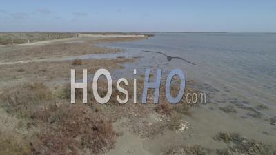 Wetland Of Saintes-Maries-De-La-Mer Viewed From Drone