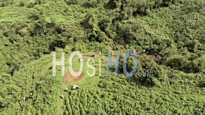 Troupeau Dans Les Prairies Bororo Ouest Cameroun - Vidéo Drone