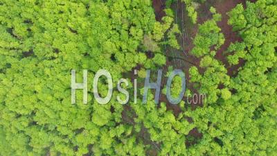 Drone Point De Vue D'une Forêt Vierge De Hêtres