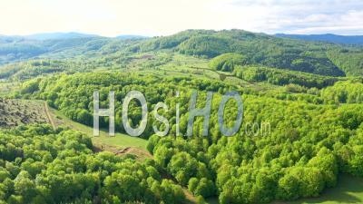 Forêt Verte En Roumanie - Point De - Vidéo Drone