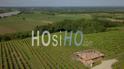 Hut In The Vineyards Fields And Garonne River From The Top, Bordeaux Vineyard, Tabanac