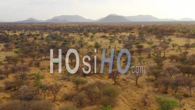 Vue Aérienne Du Paysage, Des Plaines, Des Acacias Et De La Savane De La Namibie, à La Réserve D'erindi - Vidéo Drone