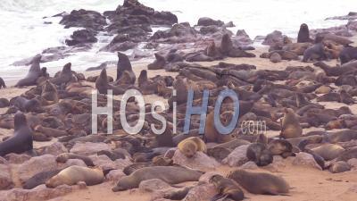 Des Milliers De Phoques Et De Bébés Sur Une Plage De L'atlantique à La Réserve De Cape Cross Seal, Namibie