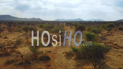 Vue Aérienne Sur Un Magnifique éléphant Solo Dans La Savane Africaine Dans Le Parc Erindi, En Namibie - Vidéo Drone