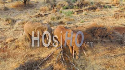 Vue Aérienne Par Drone De Deux Beaux éléphants Africains Dans La Savanne Lors D'un Dans Le Parc Erindi, Namibie