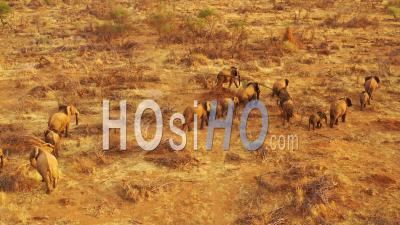 Vue Aérienne Par Drone Sur Un Immense Troupeau D'éléphants D'afrique Se Déplaçant à Travers Le Bush Et La Savane D'afrique Parc D'erindi, Namibie