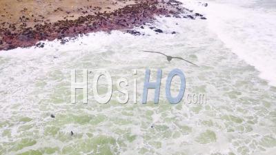 Vue Aérienne Sur La Colonie De Réserve De Phoques De Cape Cross Sur La Côte Squelettique De La Namibie -Vidéo Drone