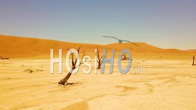 Vue Aérienne Autour Des Arbres Morts Dans Les Dunes De Sable Du Désert De Sossusvlei Dans Le Désert Du Namib, Namibie, Afrique - Vidéo Drone