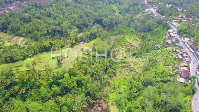 Aerial View Over Vast Terraced Rice Paddies Near Ubud, Bali, Indonesia - Video Drone Footage