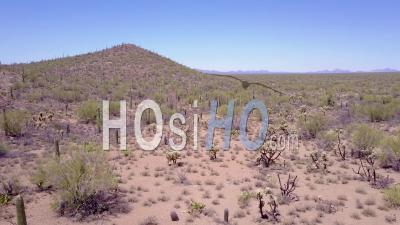 Vue Aérienne Sur Les Cactus Du Désert Dans Le Parc National De Saguaro Près De Tucson, Arizona - Vidéo Drone