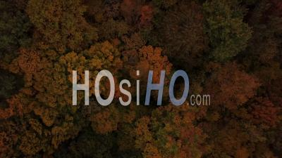 Flying Over A Forest In Autumn, Gironde