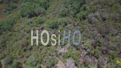 Vue Aérienne Sur Les Sommets Des Montagnes De Santa Ynez Près De Santa Barbara Révèle L'océan Lointain - Vidéo Drone