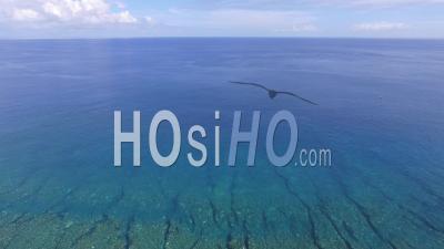 Barrière De Corail Dans Le Lagon Bleu