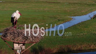 Cigogne Au Nid - Vidéo Drone