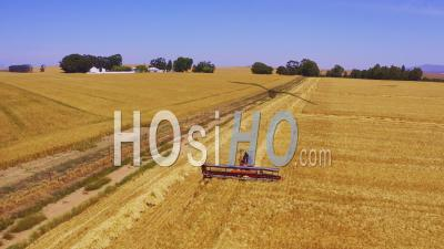 Massey Ferguson Combine Harvester In Wheat Field, Cape Town, South Africa - Video Drone Footage