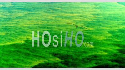 Algues Bleues Ou Vertes De Cyanobactéries Visibles En Surface Sur La Mer Baltique - Point De Vue Du Drone