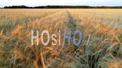 Vol Bas Sur Des Terres Arables Au Coucher Du Soleil, Suède - Vidéo Drone