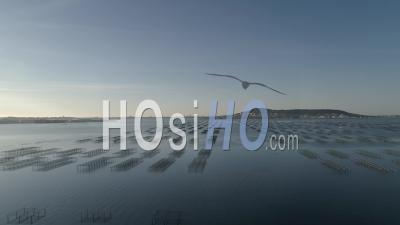Aerial View Of The Oyster Beds In Bouzigues (pond Of Thau), Filmed By Drone In Summer