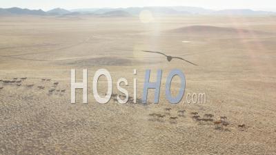 Aerial View Slow Motion Herd Of Wild Horses Running Across Plain