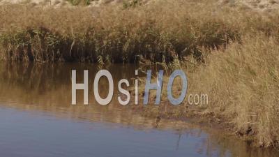 Oiseau Sur La Rivière Huchet, Vidéo Drone