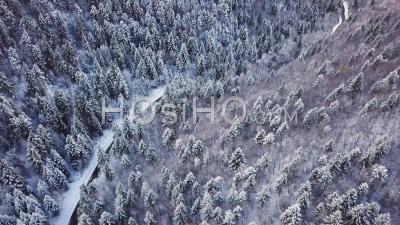 Forêt Sous La Neige, Savoie, France, Vidéo Drone