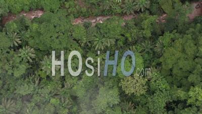 Survol De La Forêt Tropicale Et De La Rivière Au Cameroun Vidéo Drone