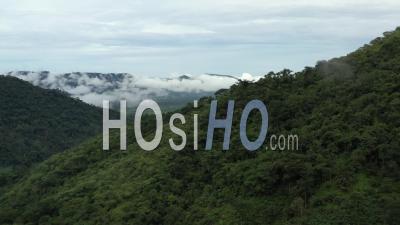 Survol De La Forêt Tropicale Au Cameroun Vidéo Drone
