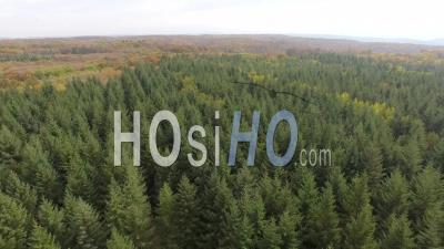 Fir Forest In Isère, Seen By Drone