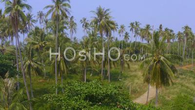 Cocotiers à L'embouchure D'une Rivière à Koh Mak - Vidéo Aérienne Par Drone