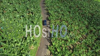 Aerial View Of A Car Driving Trough Banana Plantation - Video Drone Footage