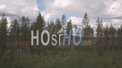 Fir Trees And A Helicopter In The Middle Of A Field, Tackasen, Sweden - Video Drone Footage