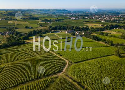 Aerial View, Bordeaux Vineyard, Landscape Vineyard - Aerial Photography