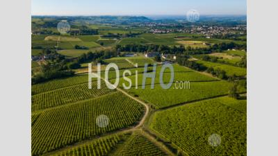 Aerial View, Bordeaux Vineyard, Landscape Vineyard - Aerial Photography