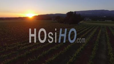 Drone Survolant Un Vignoble Au Coucher Du Soleil - Vidéo Drone