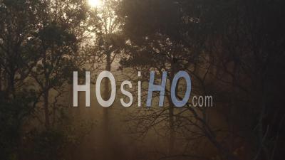 Forest Tree Fog Sunrise Loire Atlantique France Sun - Video Drone Footage