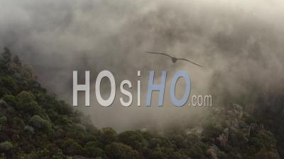 Gorges Du Blavet Esterel Var Cote D'azur Sud De La France Lever De Soleil Forêt Falaises Roches Brouillard - Vidéo Prise Par Drone