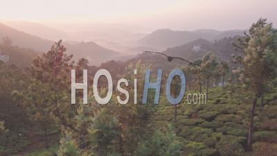 Le Magnifique Pays Brumeux Vert De Munnar, Inde – Vidéo Drone