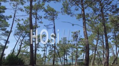 Plage Et Bassin D'arcachon, Vidéo Drone