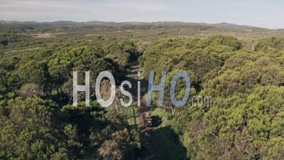 4 Wheel Drive Vehicle Driving Through Forest Scenery In Aberdare National Park, Kenya, Africa. Aerial Drone Of Safari Adventure