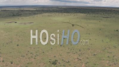Safari Game Drive à Laikipia, Kenya. Vue Aérienne Par Drone élevé De 4 Roues Motrices Conduisant à Travers Le Paysage De Savane Africaine.