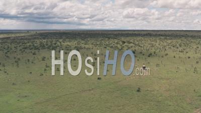 Vacances De La Faune à Laikipia, Kenya. Vidéo Aérienne Par Drone De 4 Roues Motrices à Travers Le Paysage De Savane Africaine