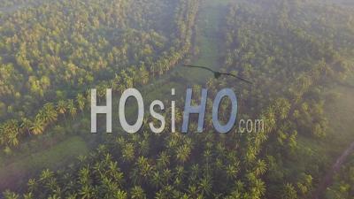 La Lumière Du Soleil Diffuse à La Plantation De Palmiers à Huile Près De Kulim, Kedah, Malaisie. - Vidéo Par Drone