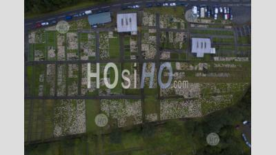 Largest Lamb Auction In Europe Held In Lairg Scotland - Aerial Photography