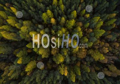Beautiful Forest Autumn Colours In The Scottish Highlands - Aerial Photography